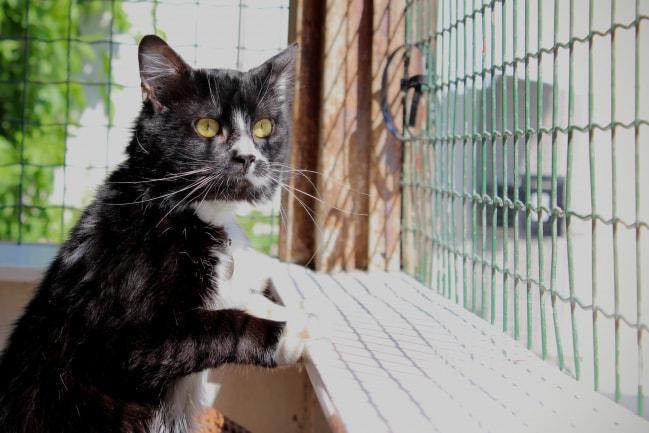 chat-noir-et-balnc-filou